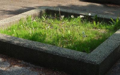 管理されていない花壇.jpg